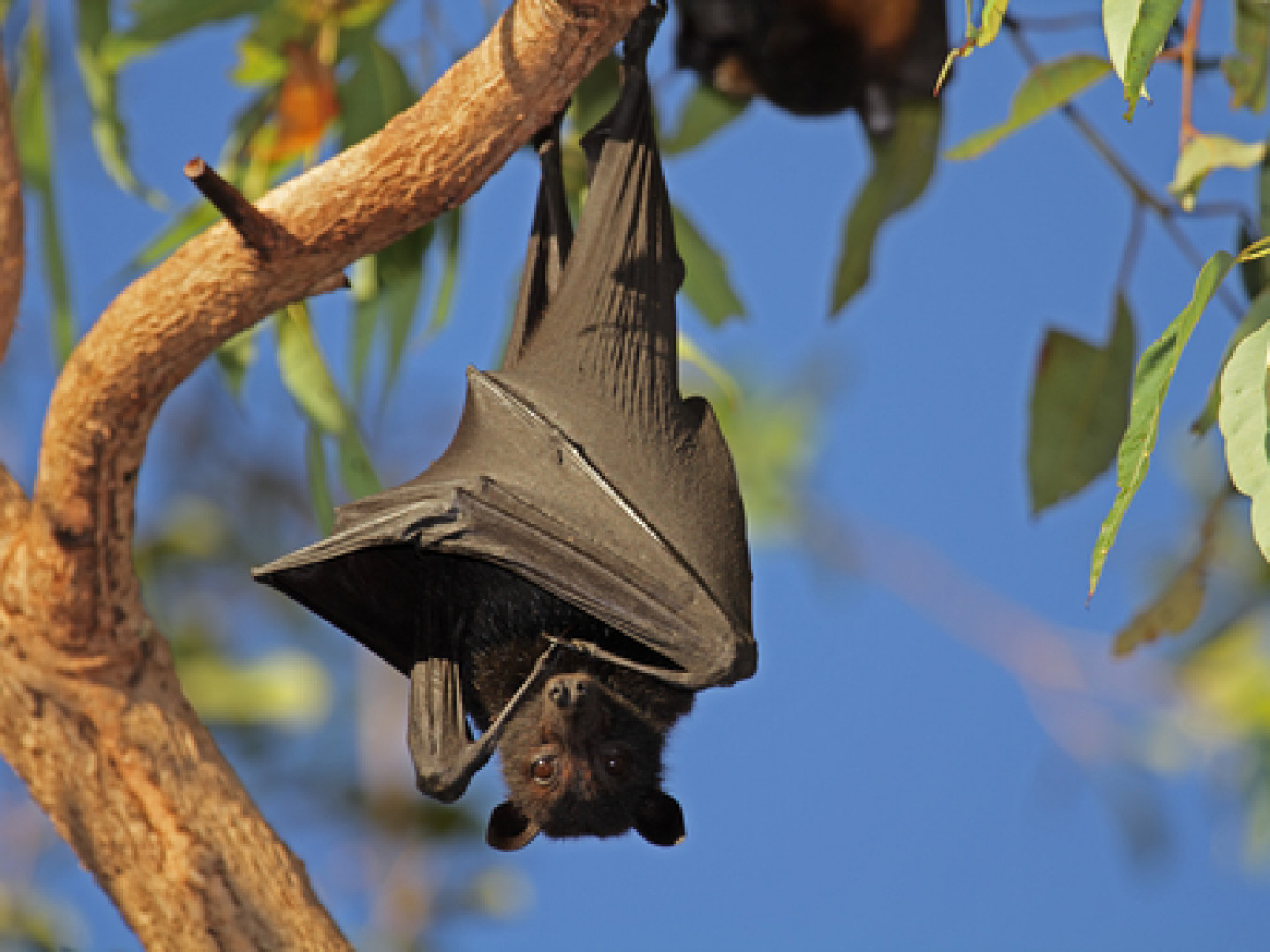 Are Winged Intruders Driving You Batty?