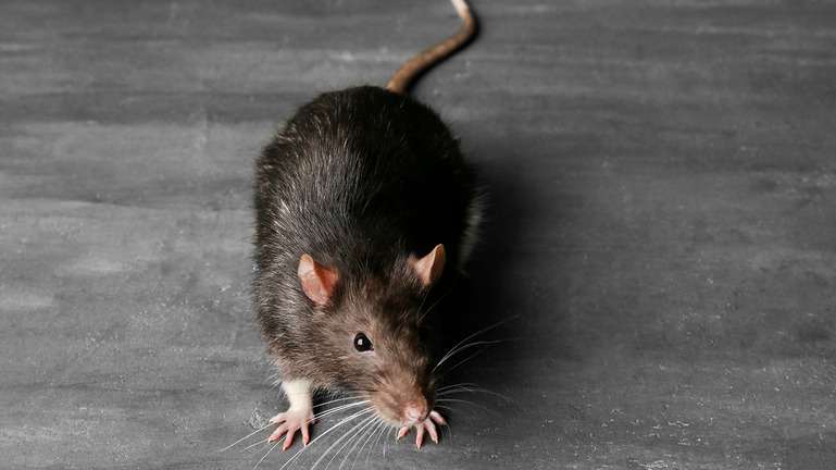 Pest Control Services   Middleton, Nampa, McCall & Boise, ID